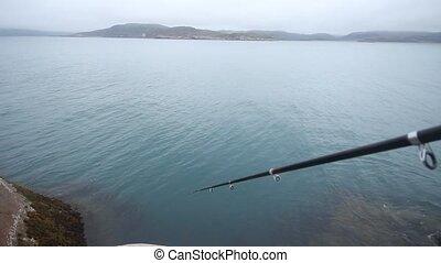 haddock on a rod on sea fishing in Scandinavia - fishing in...