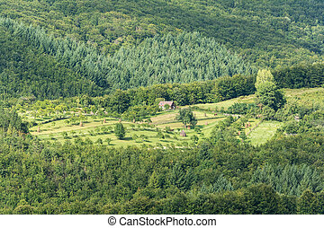 Farm Land View In Mountain Green Forest