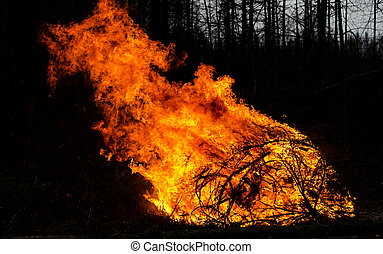 Fire - Photography of bright fire in forest.