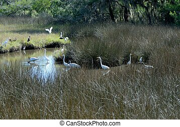 Tropical Birds - Tropical birds in the wild Florida, USA
