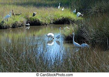 Tropical Birds  - Tropical birds in the wild Florida, USA
