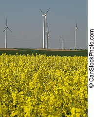 regenerative energy sources - Wind energy and rape,...