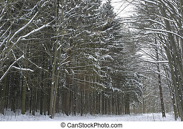 winter forest  - Winter landscape with snow in park