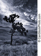 Mountain landscape with tree and dramatic clouds artistic...