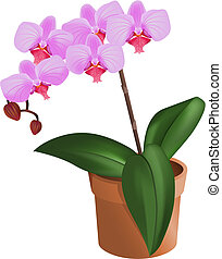 ORchid - Beautiful pink orchid