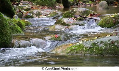 Creek Cascade with Fallen Leaves - Fresh Mediterranean river...