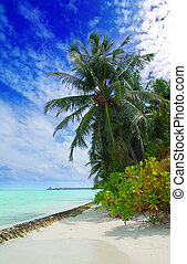 Tropical beach - Beutiful tropical beach in the Maldives...
