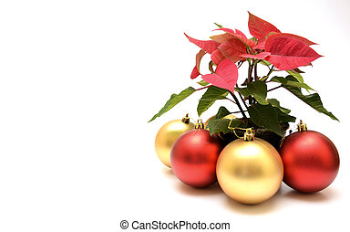 snowglobe and poinsettia - red and golden snowglobe and...