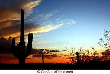 Desert Sunset - Sonoran Desert Tucson Mountain Park