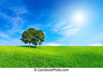 Landscape tree in clear green and blue nature and sun on...