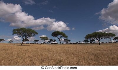 Savannah of the Serengeti time-lapse with acacia trees and...