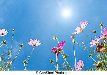 flower against blue sky under sunlight