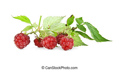 raspberry on a white background