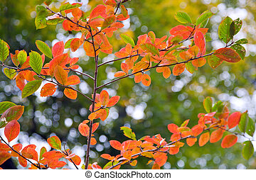 Autumn twig - Red autumn tree twig on green trees background