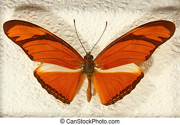 Heliconius julia butterfly. - Heliconius julia butterfly...