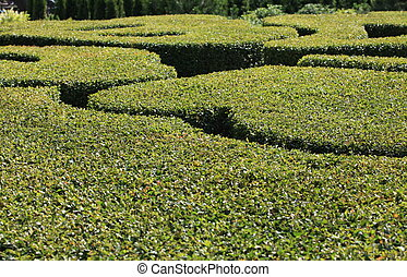 Topiary - abstract green background regular garden