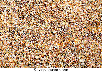 fragments of seashells background - it is abstract...