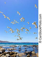 swarm of flying sea gulls - swarm of sea gulls flying close...