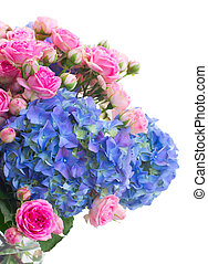 pink roses and blue hortensia flowers close up - pink roses...