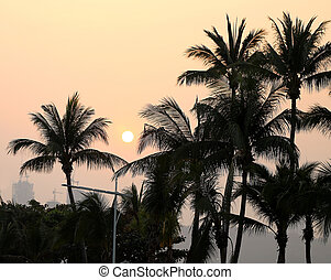 photo sunset with palm trees