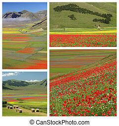 images with colorful flowery fields, Castelluccio di Norcia...