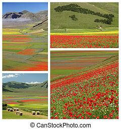 imágenes, con, colorido, florido, campos,...