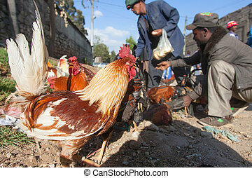 Market animals in Ethiopia - Ethiopia,Addis Ababa, January...