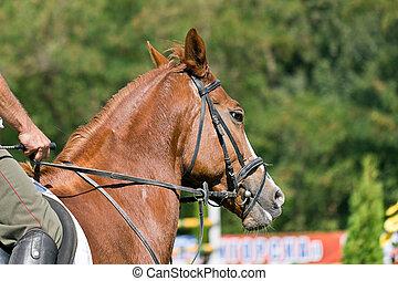Snout horse