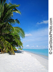 Beach in Maldives - Beautiful tropical beach with turquoise...