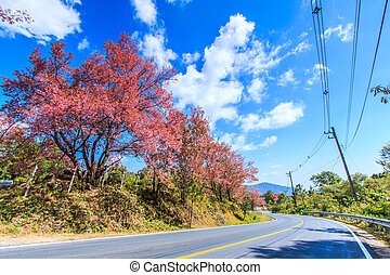 Cherry Blossom and sakura and road