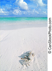 Crab on a tropical beach - Small crab on a beautiful...