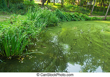 Vegetation at the bank of the green water pond, outdoor...