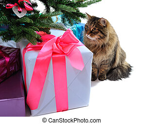 gift boxes and cat under Christmas tree isolated on white...