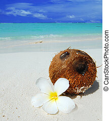 Coconut on the beach - Coconut with a white flower laying on...