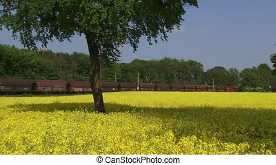 Rapeseed (Brassica napus) in field, freight train passing in...