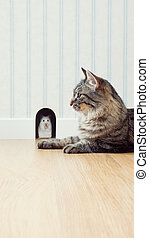 Mouse and cat - Mouse peeking out his hole on the wall with...