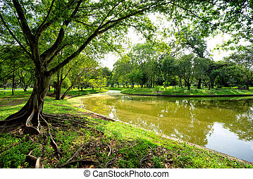 View of green trees in the park