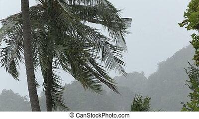 tropical rain in jungle