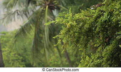tropical rain in jungle - strong tropical rain fall on...