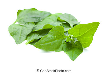 Tetragonia tetragonioides, New Zealand spinach, food...