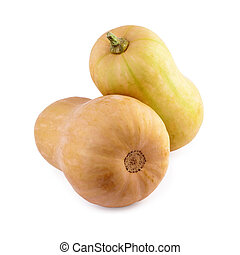 squashes butternut isolated on white