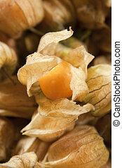 Gooseberries - Freshly harvested gooseberries in leaves,...