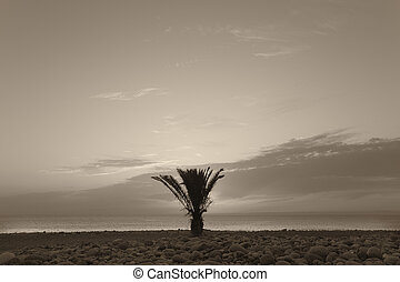 Palm tree in the beach at sunset. La Palma. Spain