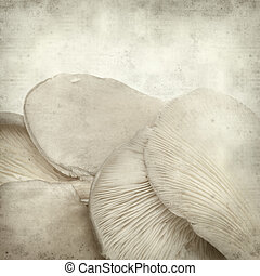 textured old paper background with oyster musroom