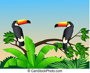 Toucan bird - Beautiful Toucan bird