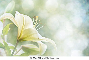 lily flowers - Lily Flowers border design.Spring Flowers