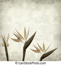textured old paper background with bird of paradise flower