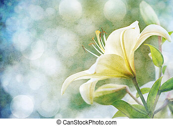 lily flowers - Textured old paper background with flowers