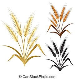 ears of wheat rye or barley decorate element set - set of...