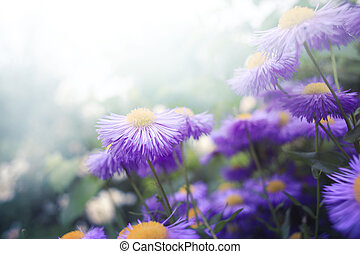 flores,